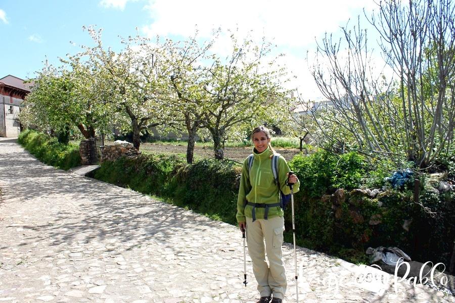 Cerezos al inicio de la ruta Monsagro-El Vao