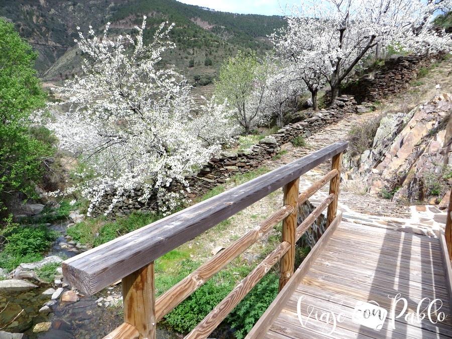 Puente sobre el arroyo de Fuente Fría senda Majá Robledo