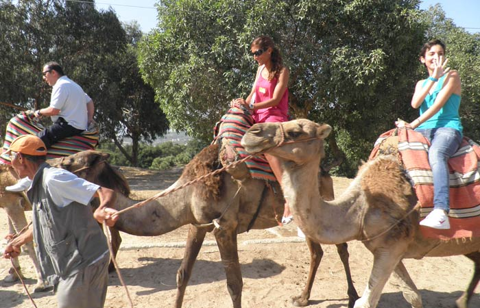 Paseo en camello un día en Tánger