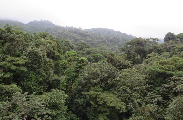 Vista del bosque nuboso de Santa Elena qué hacer en Monteverde