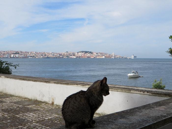 Un gato sumándose a la bella estampa de Lisboa desde Cacilhas