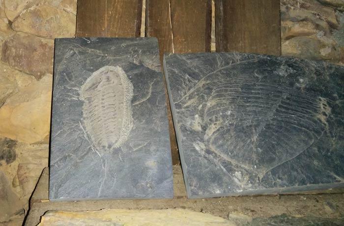 Trilobites expuestos en una de las casas Penha Garcia