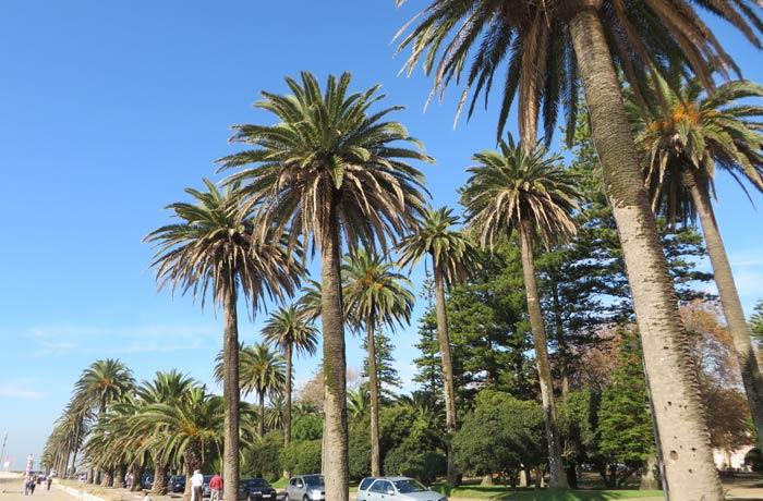 Jardim do Passeio Alegre desembocadura del Duero