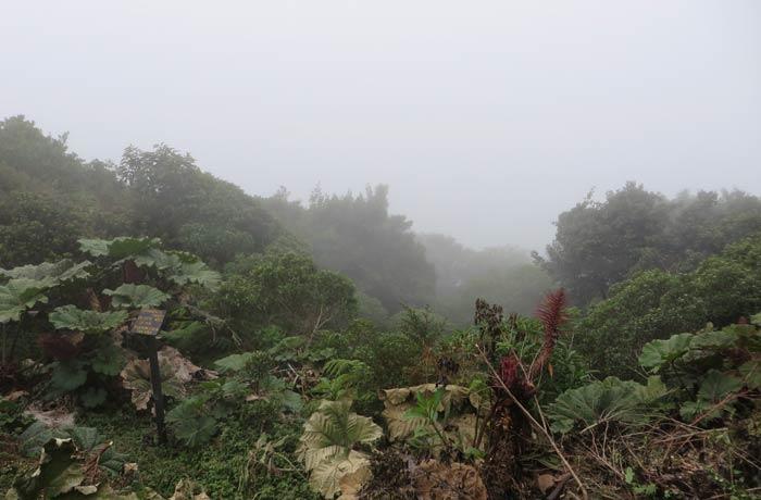 Mirador de la Laguna Botos con una densa niebla