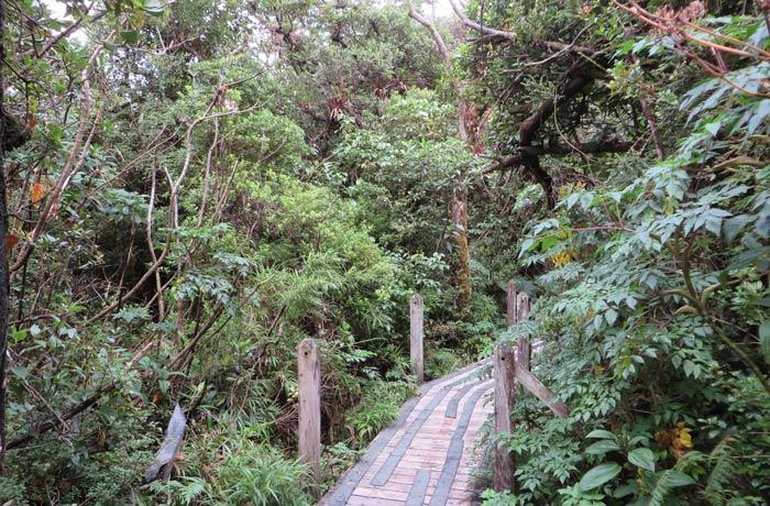 Un tramo del sendero entre la vegetación