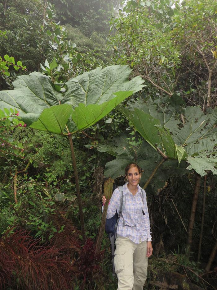 Vegetación en el Volcán Poás