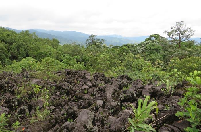 Lava y vegetación Volcán Arenal