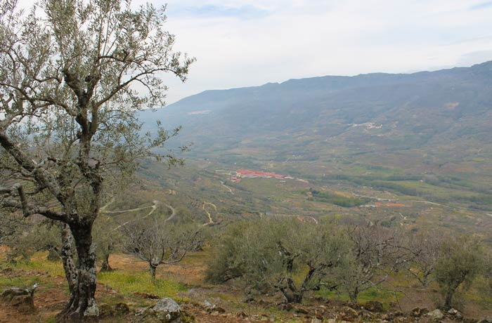 Los cerezos dejan paso a los olivos con la vista del Valle del Jerte