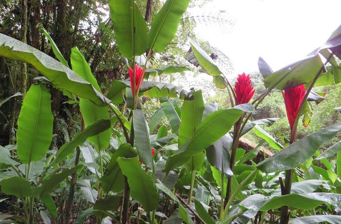 Plantas en el complejo de las Cataratas de La Paz