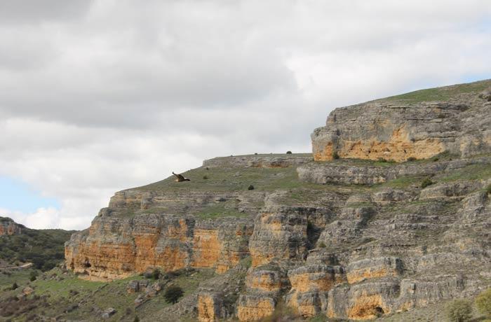Un buitre leonado con el paisaje de la ruta al fondo Senda de los dos Ríos