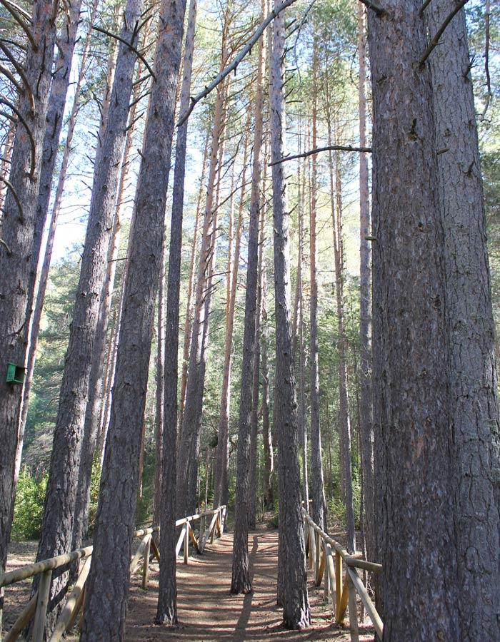 Grandes árboles en medio del sendero del nacimiento del río Cuervo