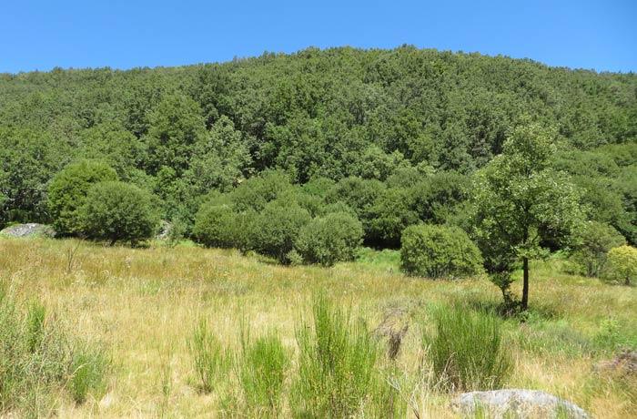 Frondoso bosque antes de regresar a Sotillo de Sanabria Cascada de Sotillo