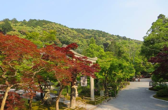 Colorido de uno de los jardines que rodean a un templo de Kioto Japón por libre