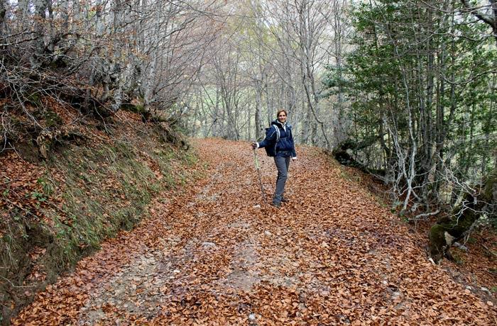 """Manto de hojas secas en el sendero de la """"sombra"""" ruta Lago del Valle"""