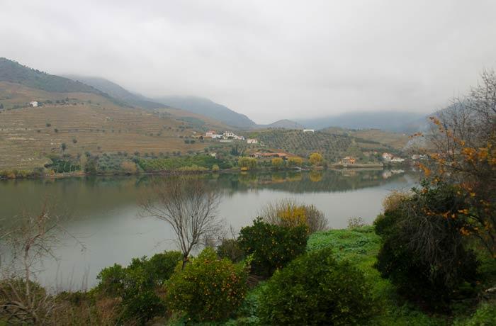 Naranjos y el Duero desde el tren Pocinho Regua