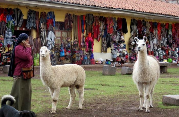 Llamas y alpacas en Cuzco Machu Picchu consejos