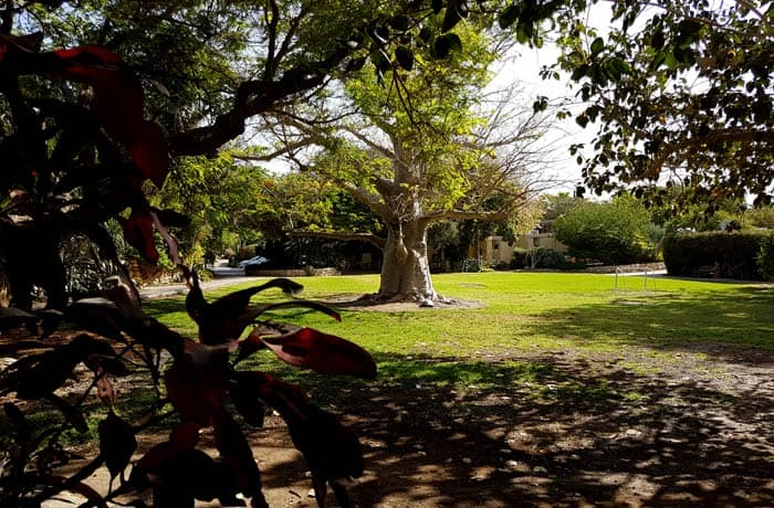 Frondosidad del jardín botánico de Ein Gedi mar Muerto en Israel