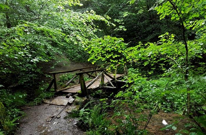 Puente de madera sobre el arroyo de la Boya ruta de las Xanas