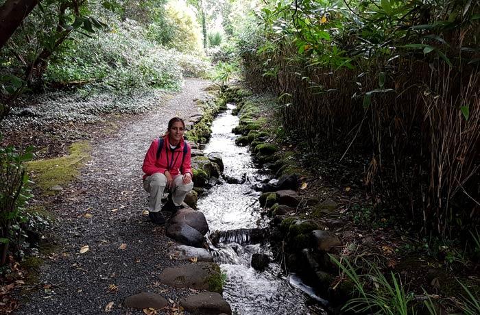 Un arroyo en la ruta de la cascada de Torc Anillo de Kerry