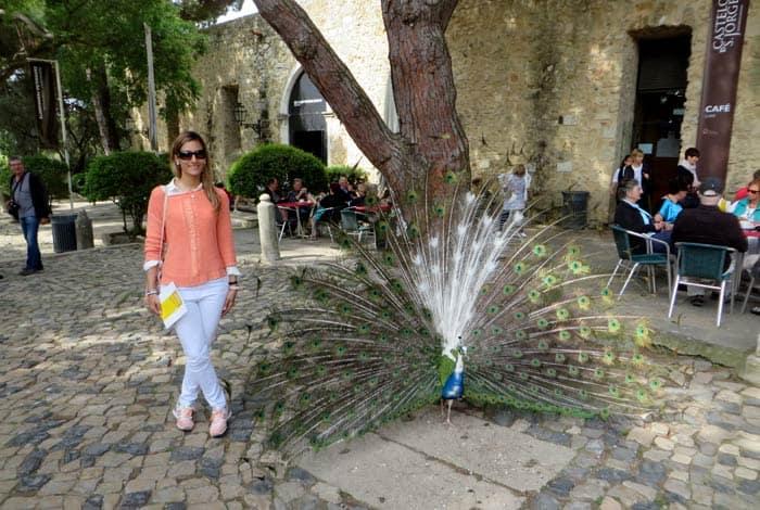 Pavo real en el castelo de Sao Jorge ruta por la Alfama
