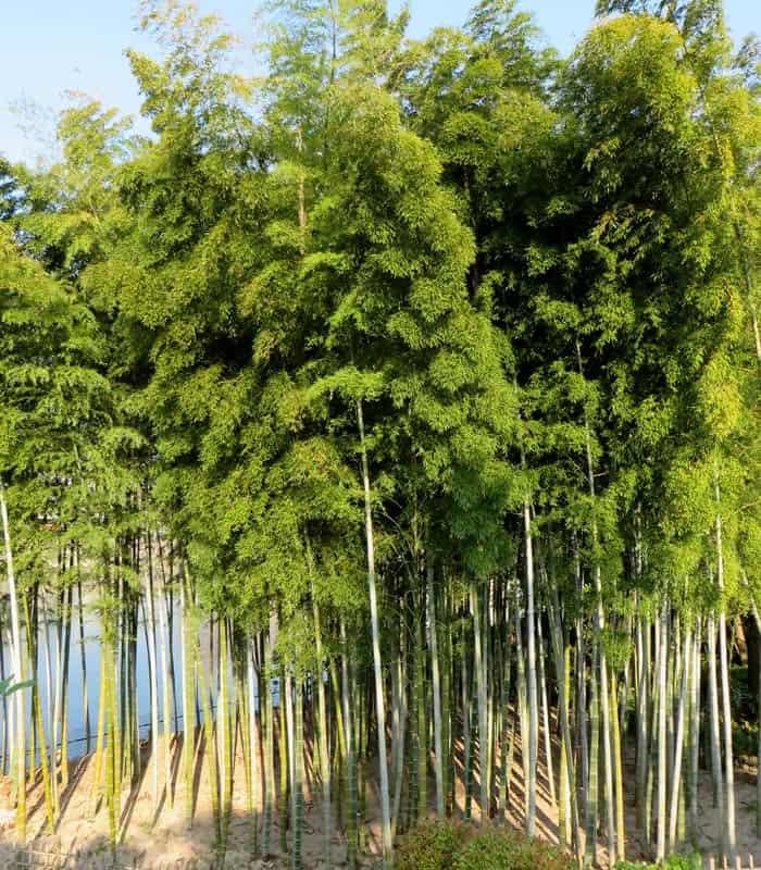 Bambú en el jardín Shukkeien que ver en Hiroshima