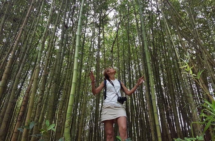 Plantación de bambú en el parque Terra Nostra de Sao Miguel viajar a las Azores por libre