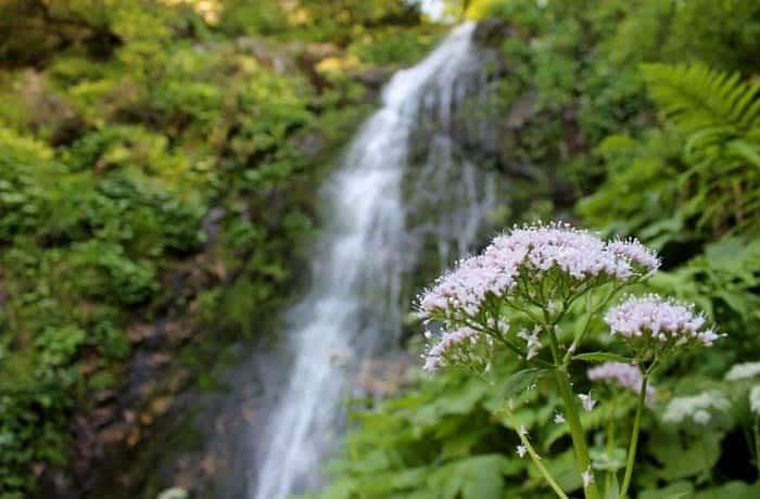 Una flor y al fondo la cascada del Xiblu
