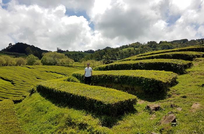 Plantación de té en Sao Miguel viajar a las Azores por libre