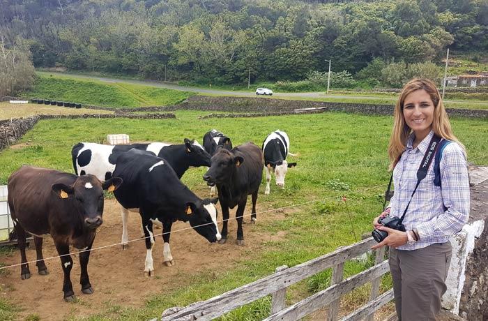 Vacas en Terceira viajar a las Azores por libre