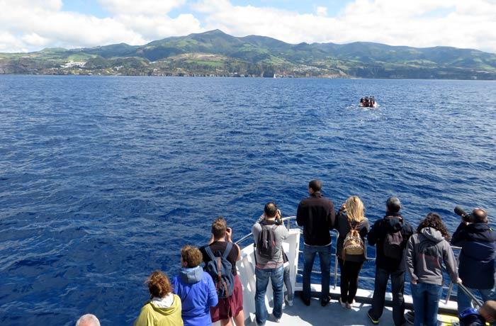 Compañeros de ruta en el barco durante la actividad ver ballenas en Azores
