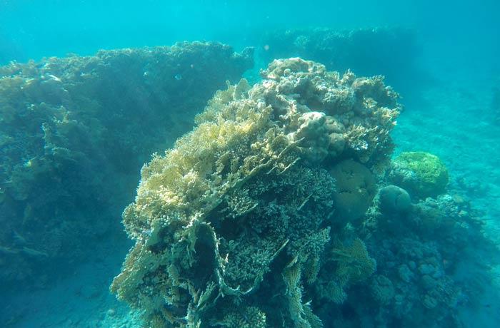 Corales en el mar Rojo qué hacer en Eilat