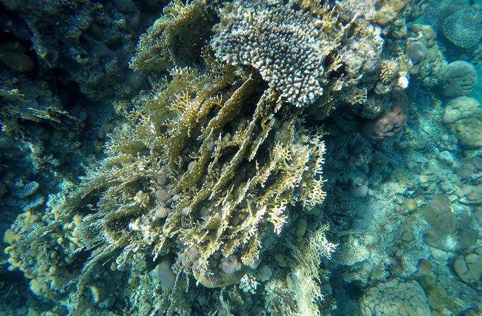 Más corales en el mar Rojo qué hacer en Eilat