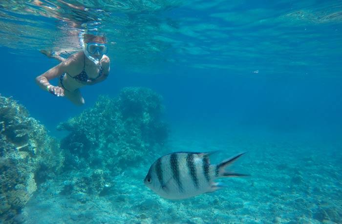 Estefanía observando a un pez sargento mayo qué hacer en Eilatr