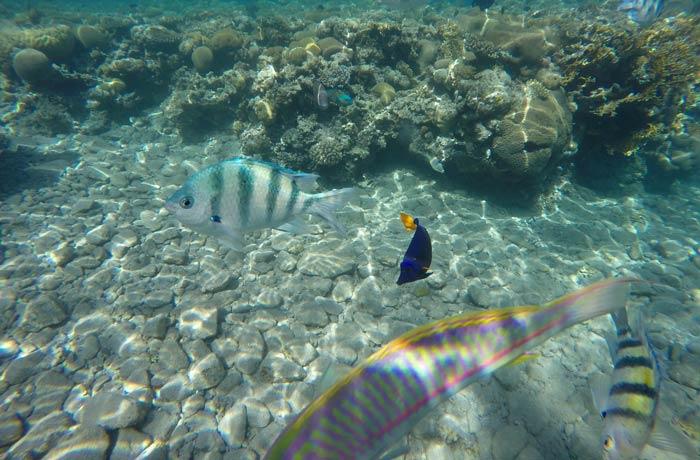 Mezcla de varios peces en el mar Rojo qué hacer en Eilat