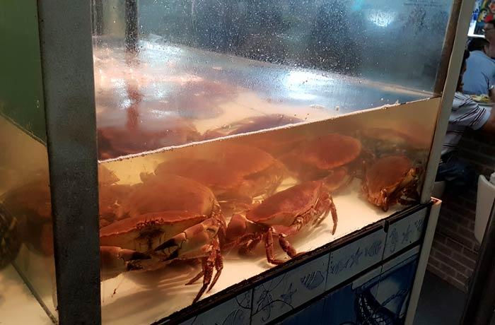 Bueyes de mar de Caçarola 1 comer en Figueira da Foz