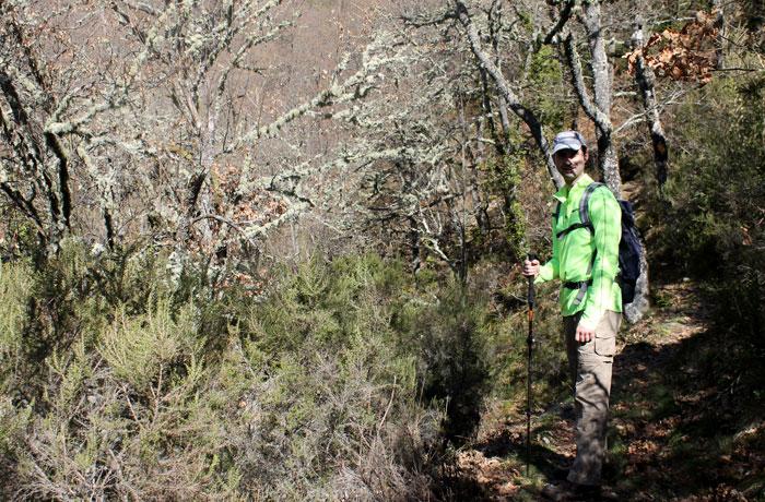 Bosque de abedules ruta de las Fuentes Medicinales