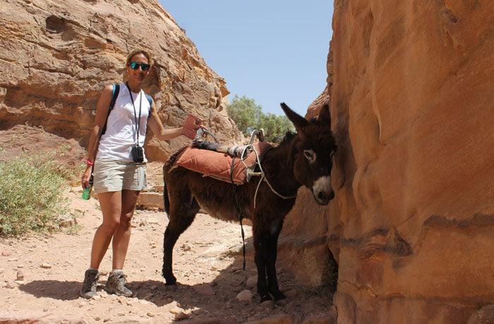Uno de los burros de los beduinos que ver en Petra