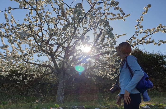Admirando un cerezo en flor Sierra de Francia