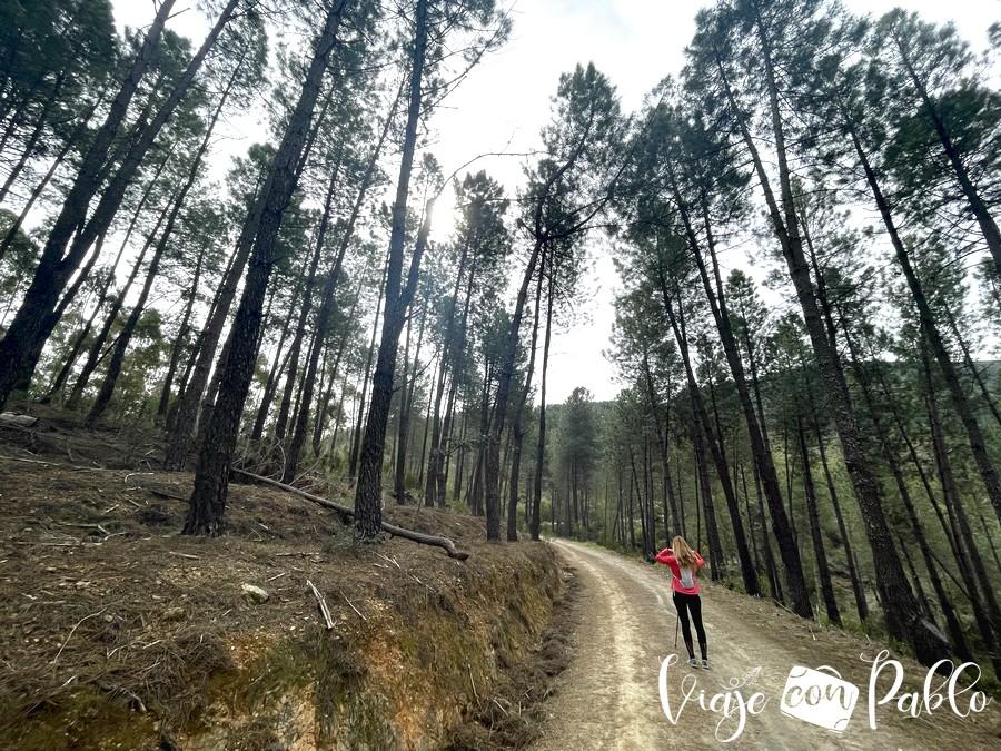 Caminando por la pista rodeados de pinos