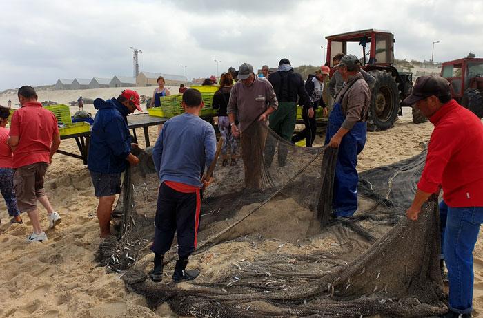 Arte de la xávega en la playa de Mira