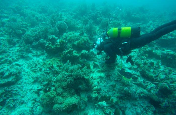 Durante la inmersión en el atolón de Mnemba buceo en Zanzíbar