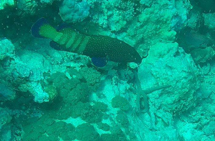 Peces que vimos durante nuestra inmersión buceo en Zanzíbar