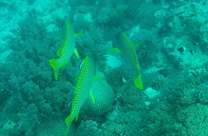 El colorido fondo marino de Zanzíbar