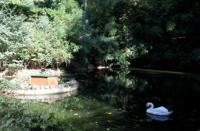 Uno de los lagos de Bussaco con un cisne