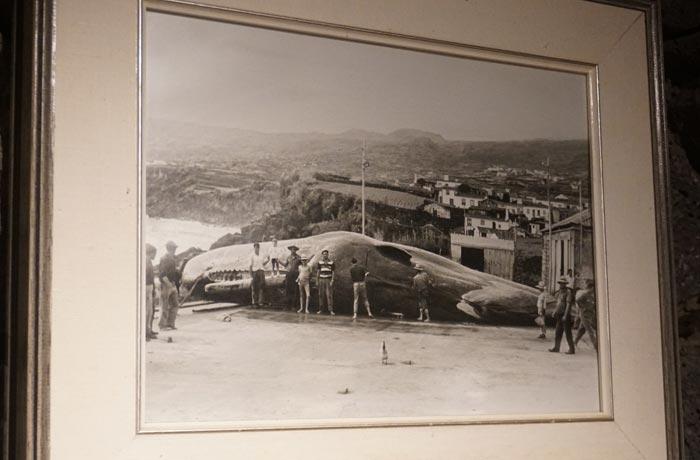 Foto de una ballena en el puerto de Lajes do Pico