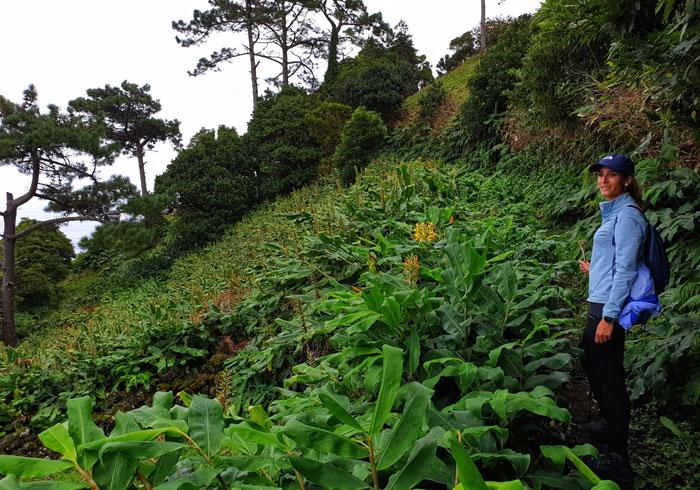 Subida al mirador de Terra Alta en una de las rutas de senderismo en Pico