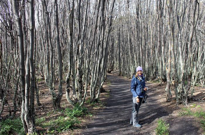 Uno de los senderos del Parque Nacional Tierra del Fuego