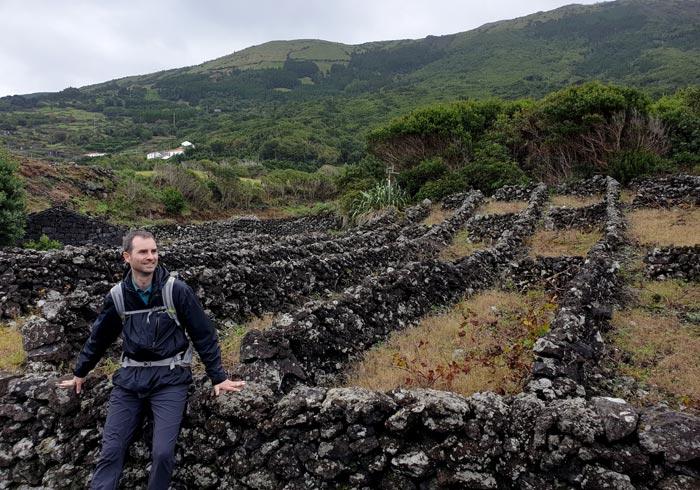 Vides de Pico cultivadas por el método tradicional