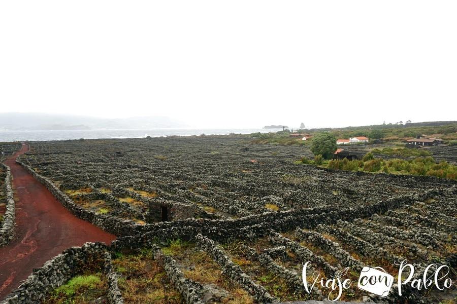 Paisaje vitícola de la isla de Pico