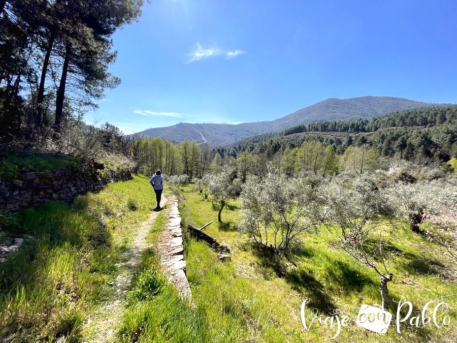 Campos de olivos en el sendero que parte de Rebollosa a Riomalo